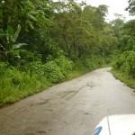 Droga przez dzungle