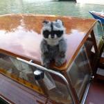 Szop na Taxi, Wenecja
